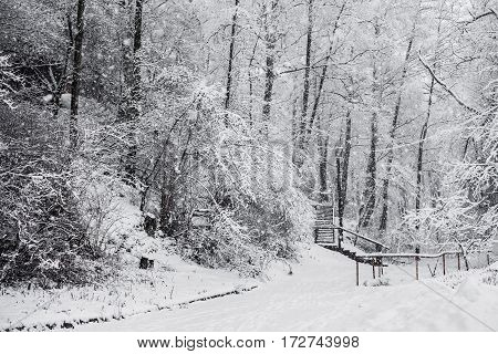 Fairy winter forest in the snow. Winter time. Heavy snowfall. Trees in the snow. Beautiful landscape. The trunks and branches of trees. Stairs to the hill. Mountain winter landscape