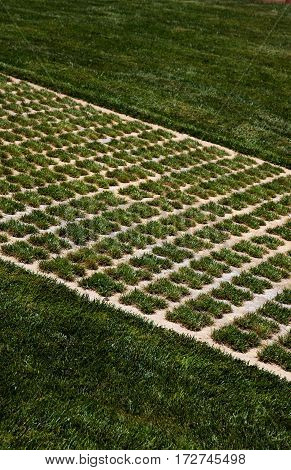 Immaculate patterned lawn at the Citadel Victoria Gozo