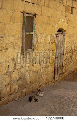 Two cats lying down in an alley in Fontana Gozo Malta