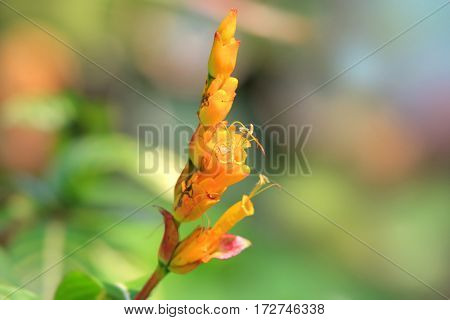 Close up shot of tropical flower