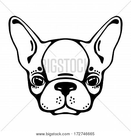 French bulldog head isolated, white background. Vector illustration