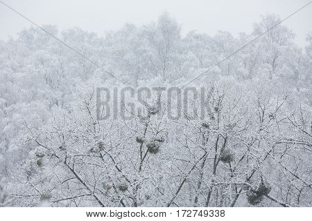 Fairy winter forest in the snow. Winter time. Heavy snowfall. Trees in the snow. Beautiful landscape. The trunks and branches of winter trees.