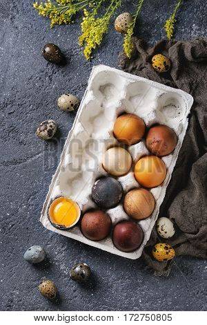 Brown and gray colored chicken and quail Easter eggs in paper box with yolk, yellow flowers, sackcloth rag over black concrete texture background. Top view