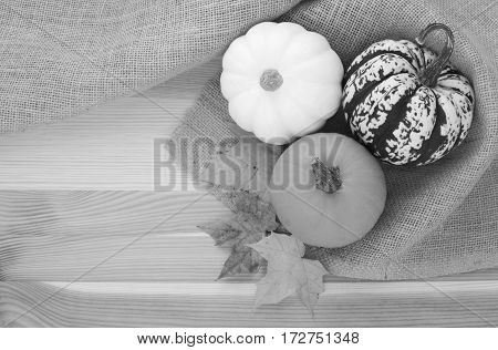 Three small autumn gourds with fall maple leaves in coarse hessian material with copy space