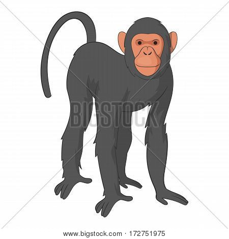Bonobo monkey icon. Cartoon illustration of bonobo monkey vector icon for web