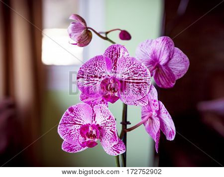 Pink And White Beautiful Orchid