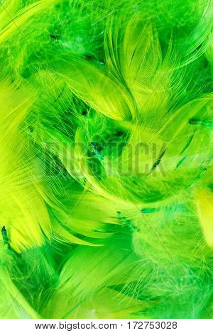 Color feathers