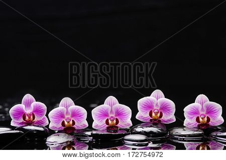still life with black stones and five orchid