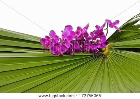 Pink orchid on palm background