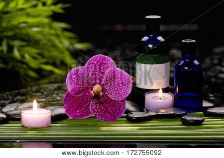 spa concept –red orchid and ,stones , ,candle ,plant, oil on green long leaf