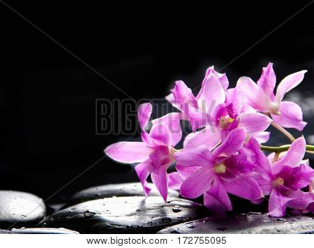 still life with pebbles and bouquet orchid
