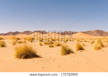 View over sand dunes in the Sahara desert Ouzina with some black mountains in the background and some grass in the foreground, Morocco.