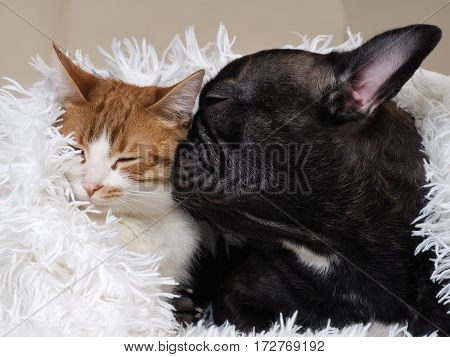 Dog and cat lie together snugly pressed against each other. Bed white plaid
