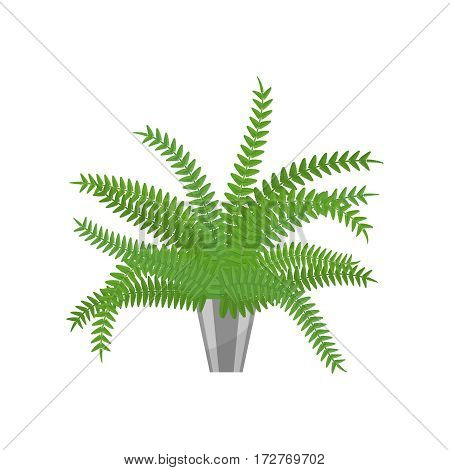 Fern. House plant realistic icon for interior decoration . Green plant in flowerpot. Vector illustration isolated on white background