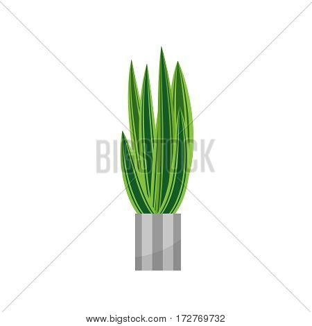 Aloe. House plant realistic icon for interior decoration . Green plant in flowerpot. Vector illustration isolated on white background