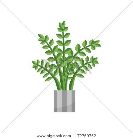 Zamiya. House plant realistic icon for interior decoration . Green plant in flowerpot. Vector illustration isolated on white background
