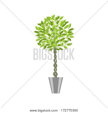 Benjamin ficus. Deciduous plant in flowerpot. House plant realistic icon for interior decoration .Green tree plant in flowerpot. Vector illustration isolated on white background