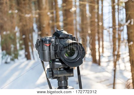 Photo camera on a tripod in the forest.