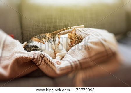 Sweet cat sleeping on couch in living room