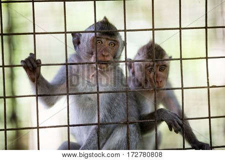 two wild cute monkeys at cage