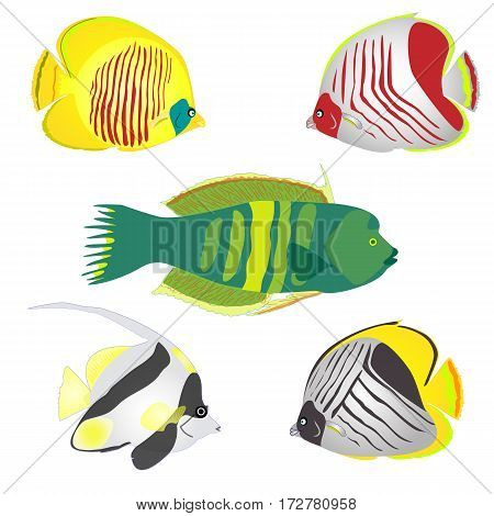Red Sea fishes. Cartoon colorful vector illustration.