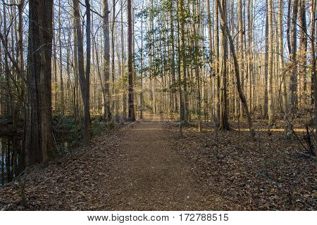 Paved trails during early spring