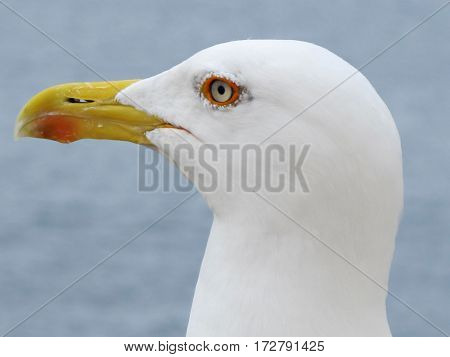 close up of a seagull isolated on the street