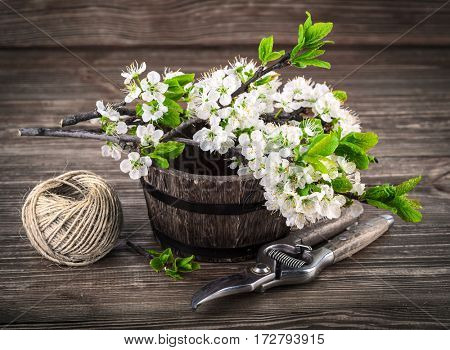 Spring bunch blooming branch tree flowers with green leaf and garden tool on old wooden board in rustic style
