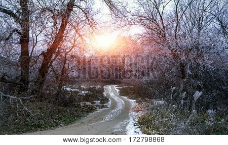 winter background. forest road with snowy trees at sunset.