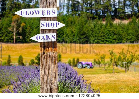 Lavender Garden With Direction Signs And Tractor In Background