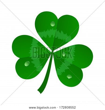 vector green realistick clover on white background