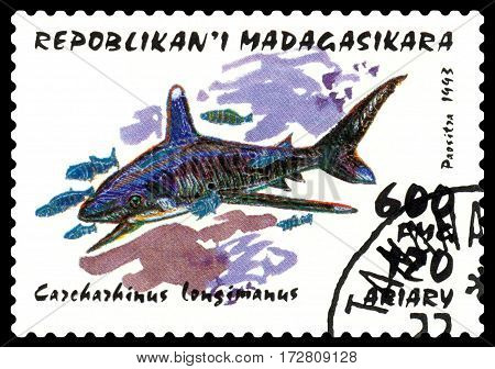 STAVROPOL RUSSIA - February 17 2017: a stamp printed by Malagasy shows Carcharhinus longimanus (whitetip shark) circa 1993