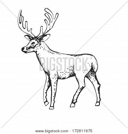 Deer engraving style, vintage illustration, hand drawn, sketch, Illustration for your application