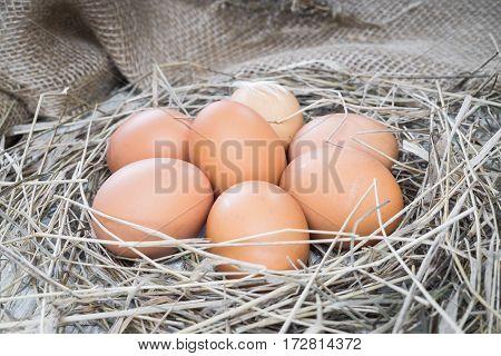 Brown eggs in hay nest. Chicken eggs in straw