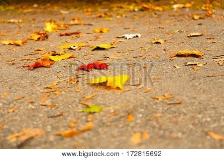 Beautiful autumn leaves on ground in park