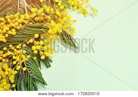Spring background - mimosa spring flowers on the light green wooden surface. Colorful spring background with free space for text for spring holiday message. Spring still life -background with spring flowers