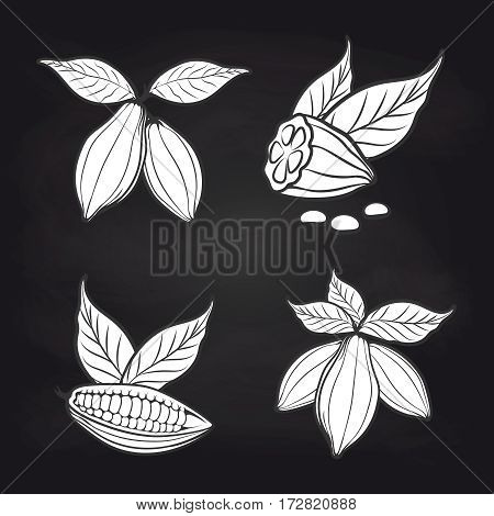 Black and white cocoa beans with leaves on blackboard background. Vector cocoa stickers design