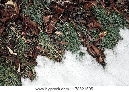 Melting Snow On Green Grass Close Up - Between Winter