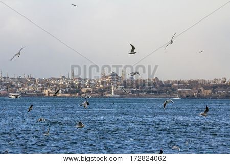 Seagulls flying over the Bosphorus strait Ayasofya (Saint Sophia) mosque can be seen in the background