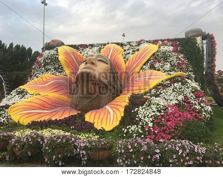 DUBAI - FEB 11: Dubai Miracle Garden as seen on Feb 11, 2017. It is the largest natural flower garden in the world with a wide variety of flower arrangements.