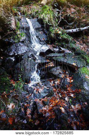 Carpathian forest  waterfall