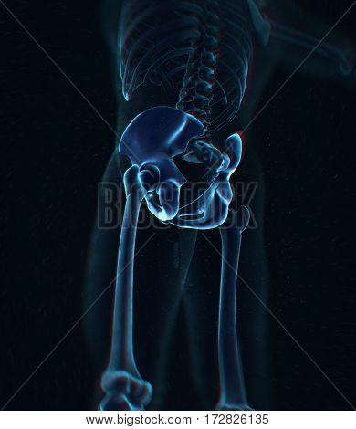 Ilium bone, hip bone or pelvis. Human anatomy, bone skeletal structure xray. 3D illustration.