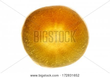 Parsnip slice, backlit revealing structure , isolated on white background.