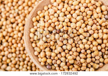 Mustard seeds in wooden spoon on heap mustard background.