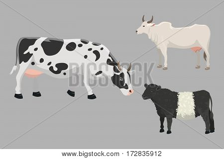 Set of bulls and cows farm animal vector illustration. Cattle mammal nature beef agriculture. Domestic rural bovine horned cartoon buffalo.