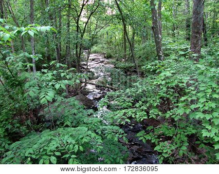 Stream through the woods, Big Round Top, Getysburg national military park, Getysburg Pennsylvania