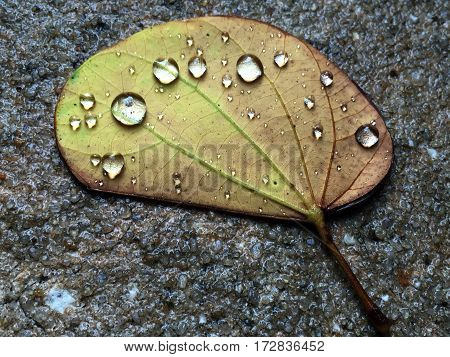 Leaves that fall tend to catch and hold rain drops.