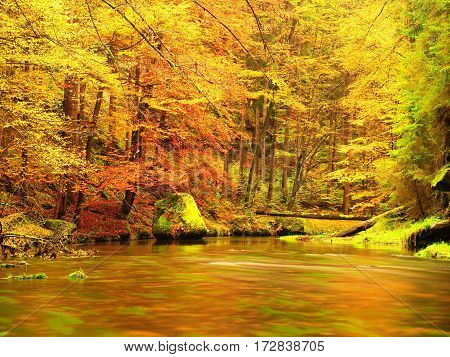 Autumn Nature. Mountain River In Colorful Leaves Forest .