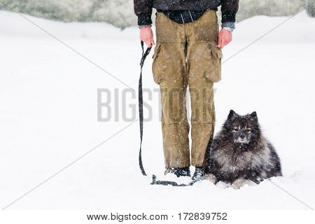 Keeshond dog near his master. Classes in dog training outside in the winter season