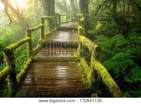Beautiful rain forest at ang ka nature trail in doi inthanon national park Thailand